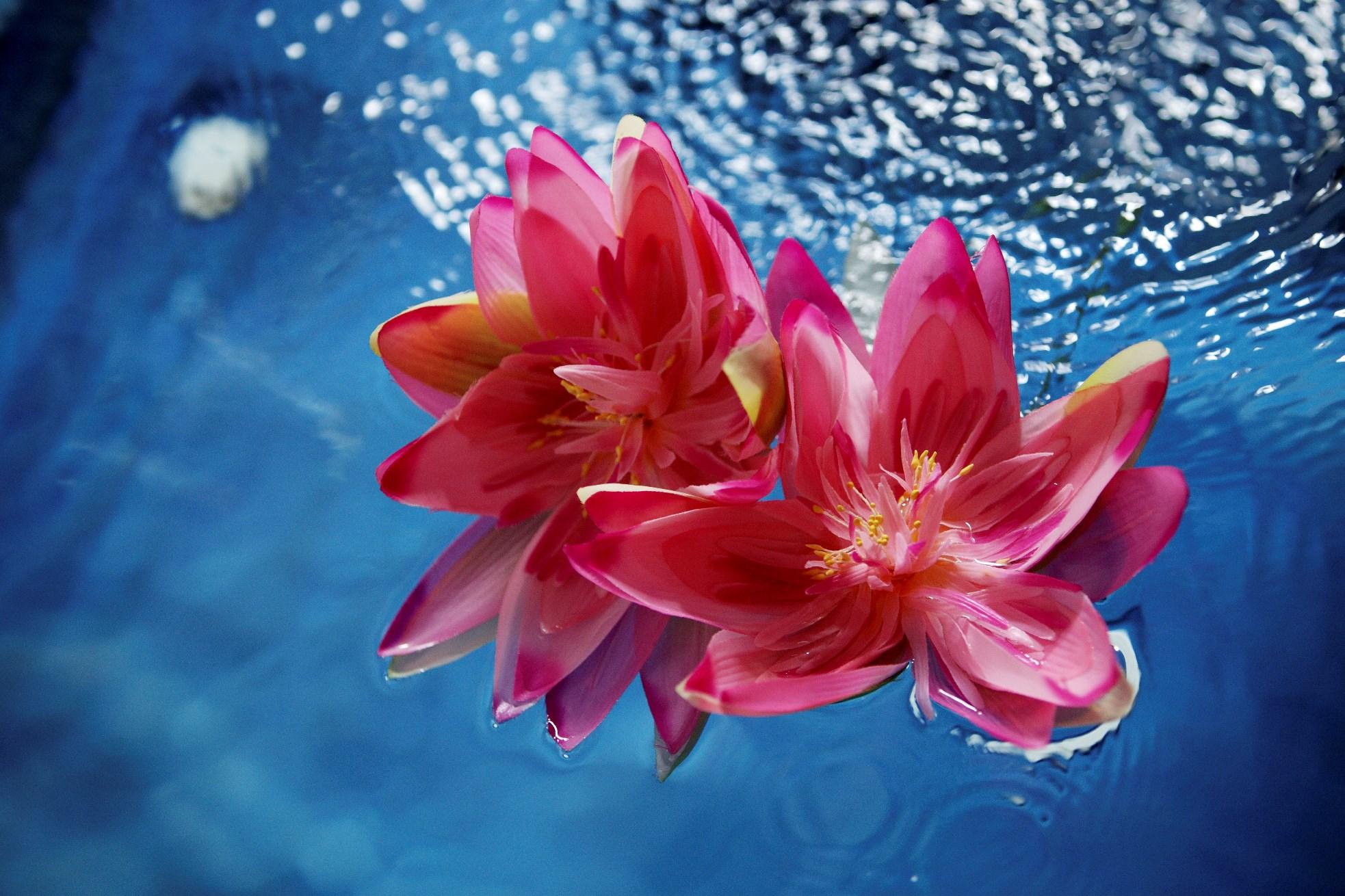 Očisťujúca a harmonizujúca meditácia